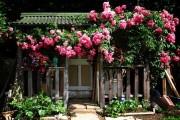 4_giardinaggio